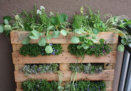 Vertical garden with their own hands
