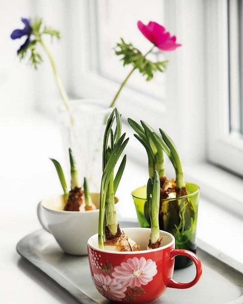 цветы в чашках