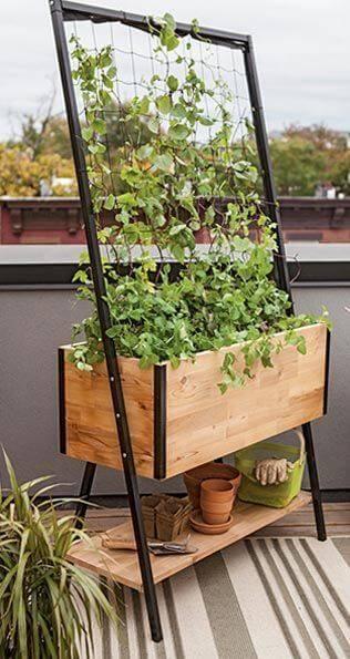 Огород на балконе фото 09