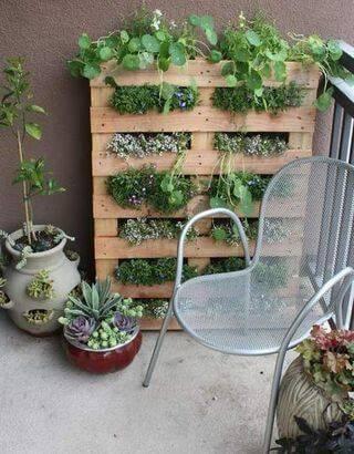 Огород на балконе фото 20