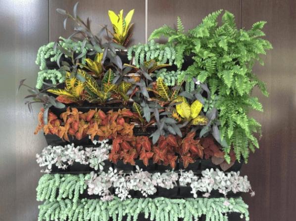 Vertical gardening photo 1