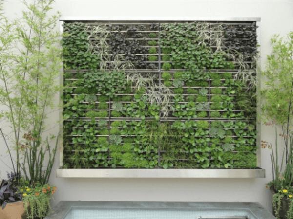 Вертикальное озеленение фото 2