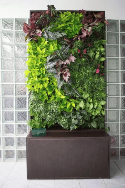 Vertical gardening photo 5