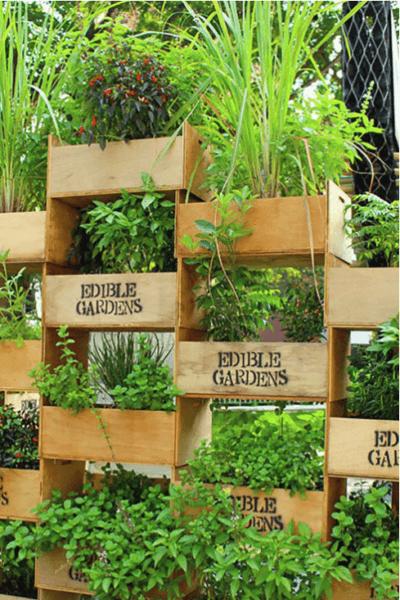 Vertical gardening photo 6