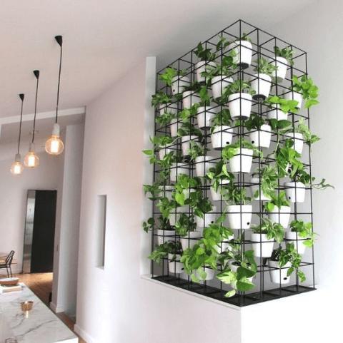 Vertical gardening photo 9