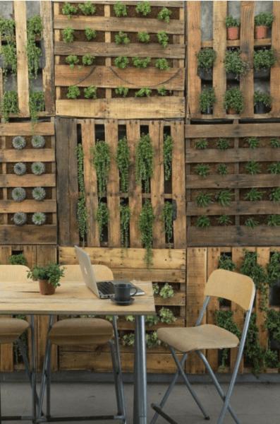 Vertical gardening photo 11