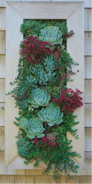 Вертикальное озеленение фото 18