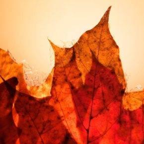 Осенние поделки в садик фото 04