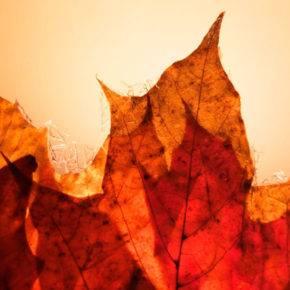 поделки из листьев фото 031