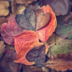 поделки из листьев фото 049