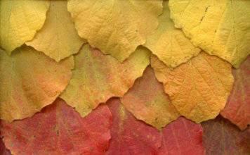 поделки из листьев фото 052