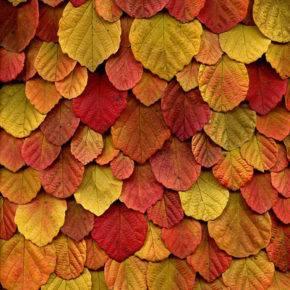 Осенние поделки из природного материала фото 48