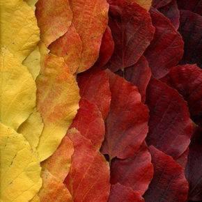 Осенние поделки из природного материала фото 58