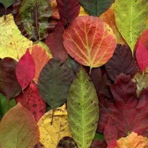 Осенние поделки из природного материала фото 69