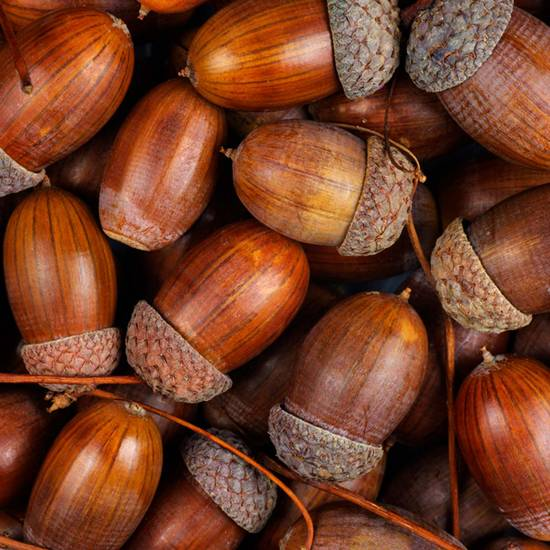 Поделки из природного материала из желудей