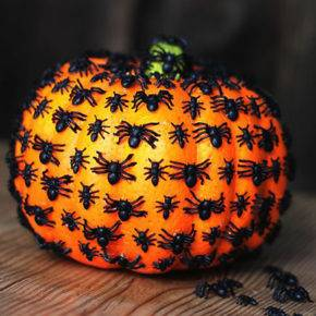 halloween pumpkin with spiders photo 060